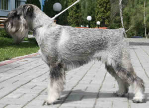 GREY TETIS JUBIQUITOS EDWARD TEACH